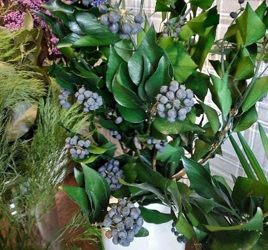 detail ke hedera arborea fruits